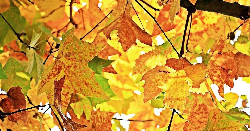 autumn-1655915_960_720.jpg