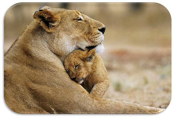 animais selvagens leoa e cria