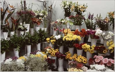 Florista 15737976_GkRzR