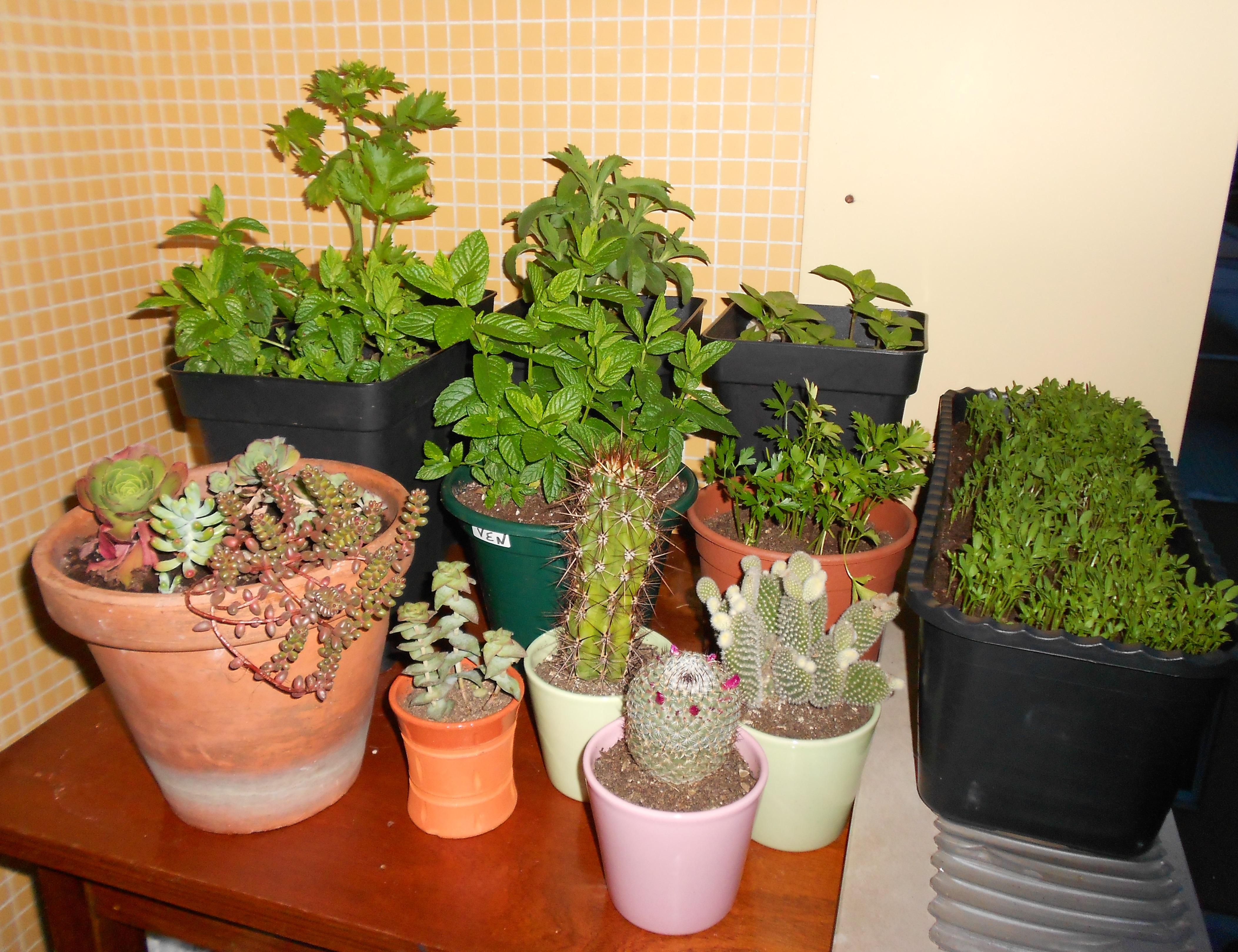 Jardim Ou Uma Horta De Ervas Aromáticas E Tornar Esse ...