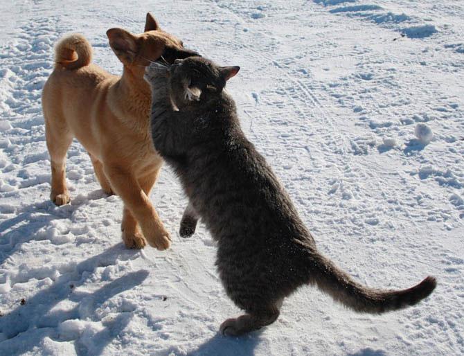 amizade cão gato animais amigos inseparáveis ucrânia frio